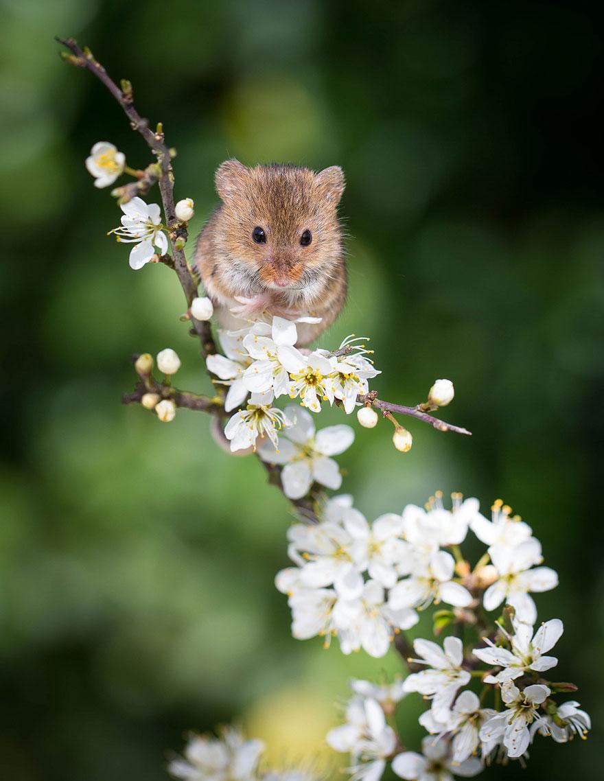 ratones graciosos 19