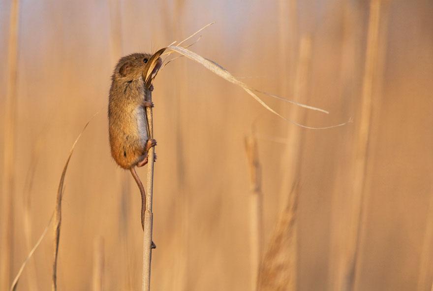 ratones graciosos 2