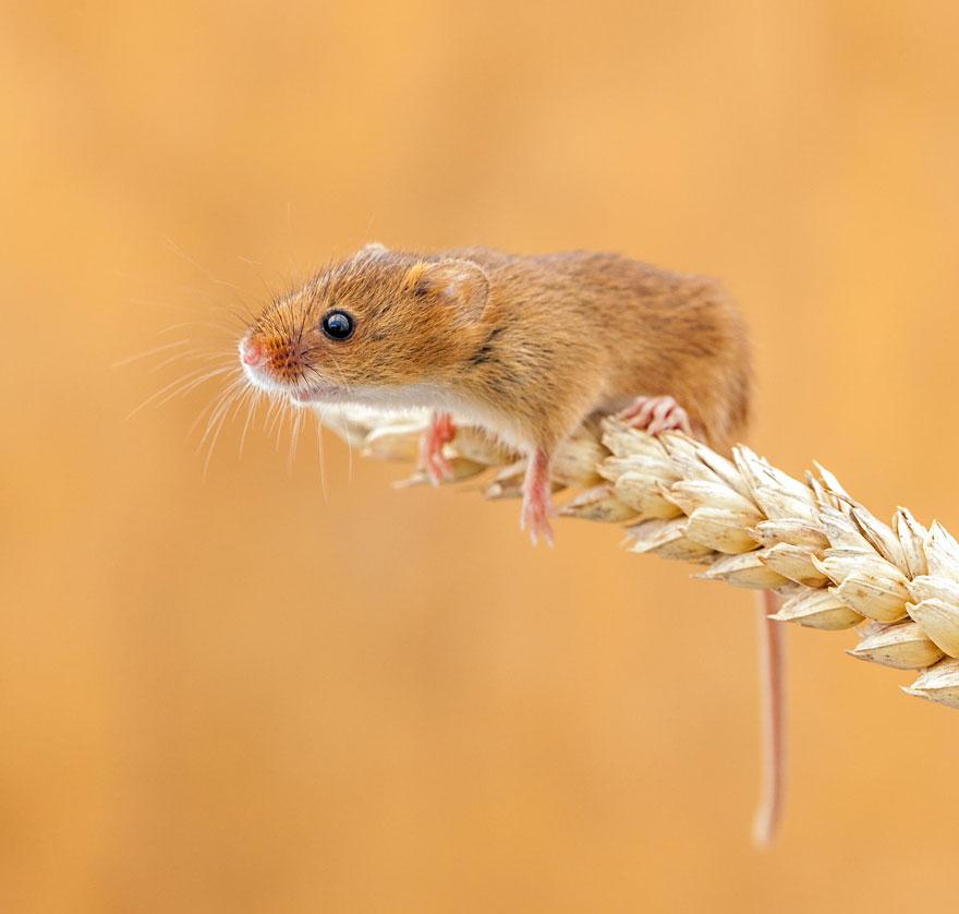 ratones graciosos 21