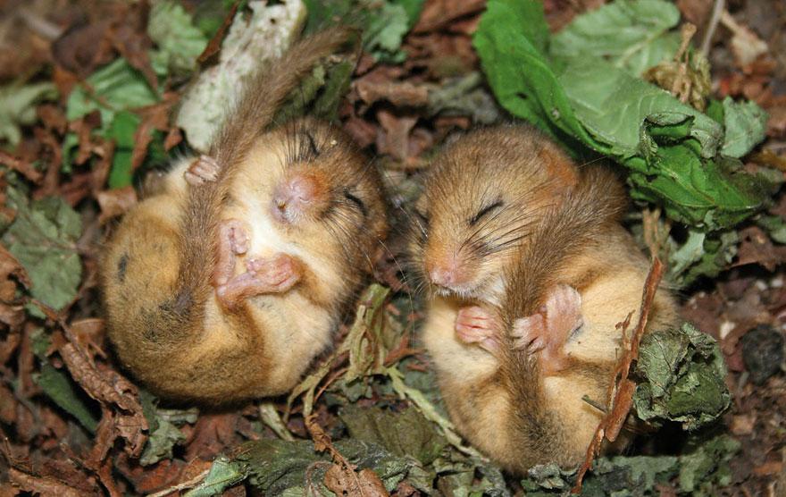 ratones graciosos 3