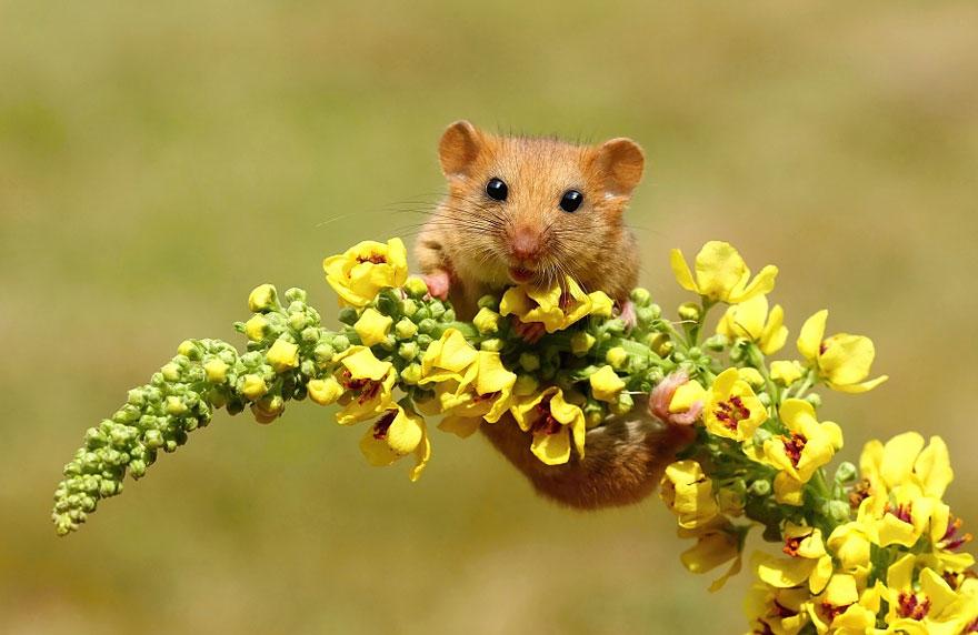 ratones graciosos 5
