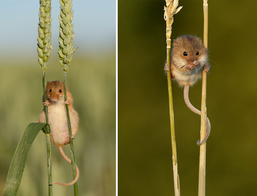 ratones graciosos 6
