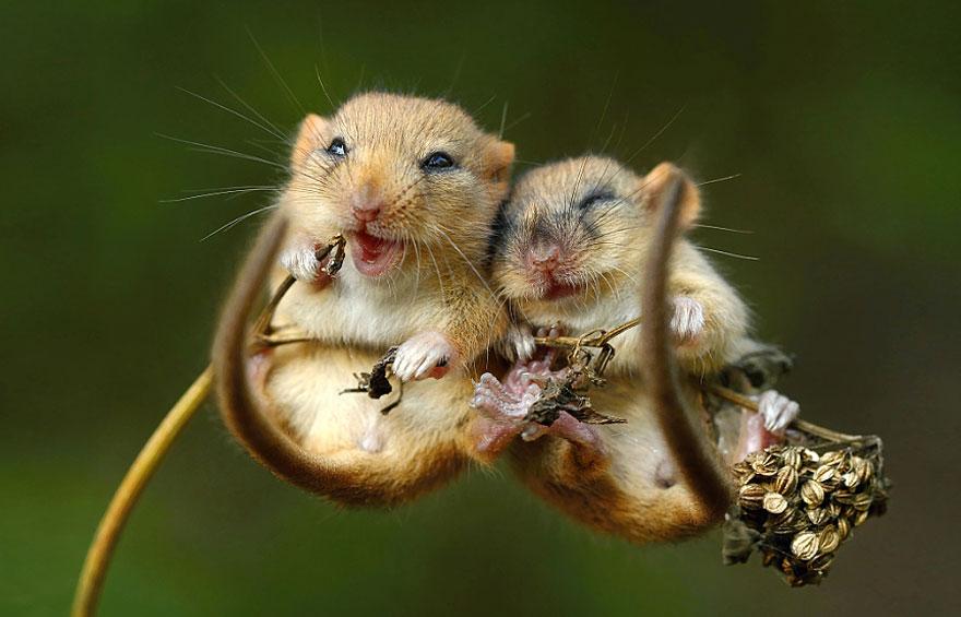 ratones graciosos 7
