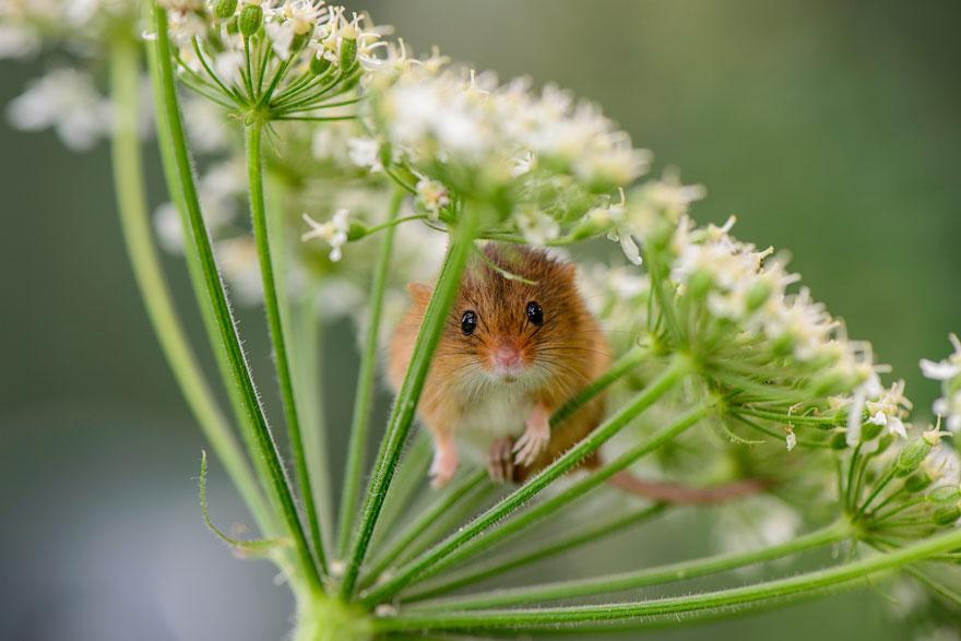 ratones graciosos 8