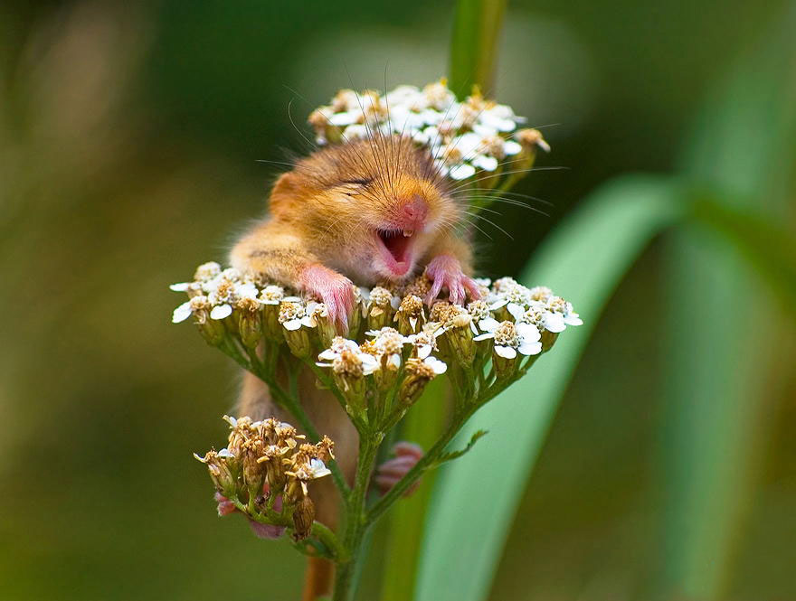 ratones graciosos