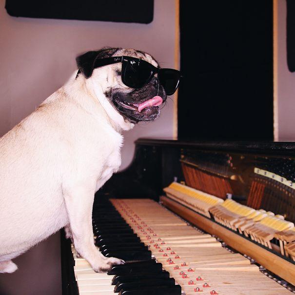 un perro muy famoso 11
