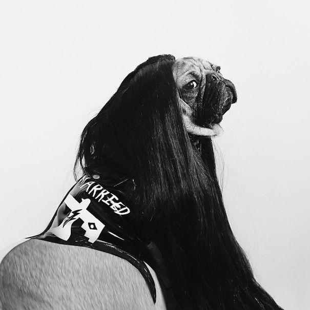 un perro muy famoso 6