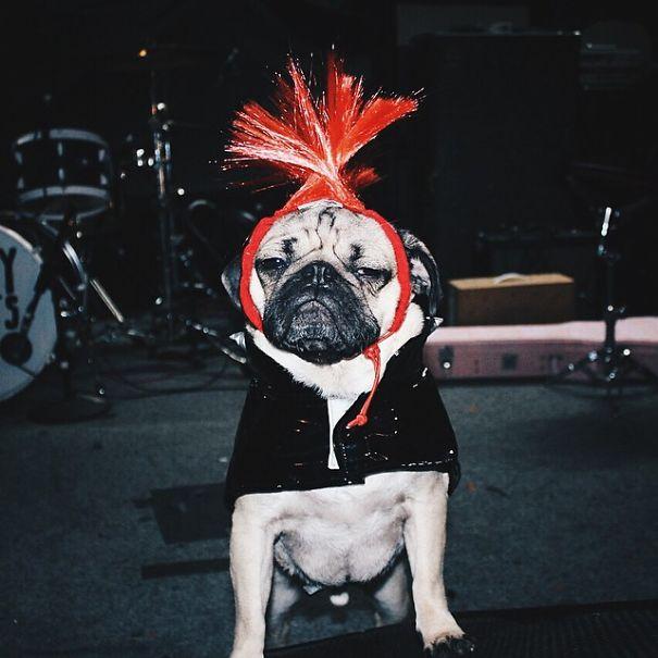 un perro muy famoso 9