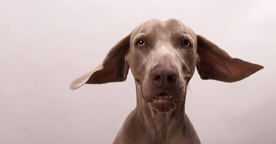 Bruma perro 3