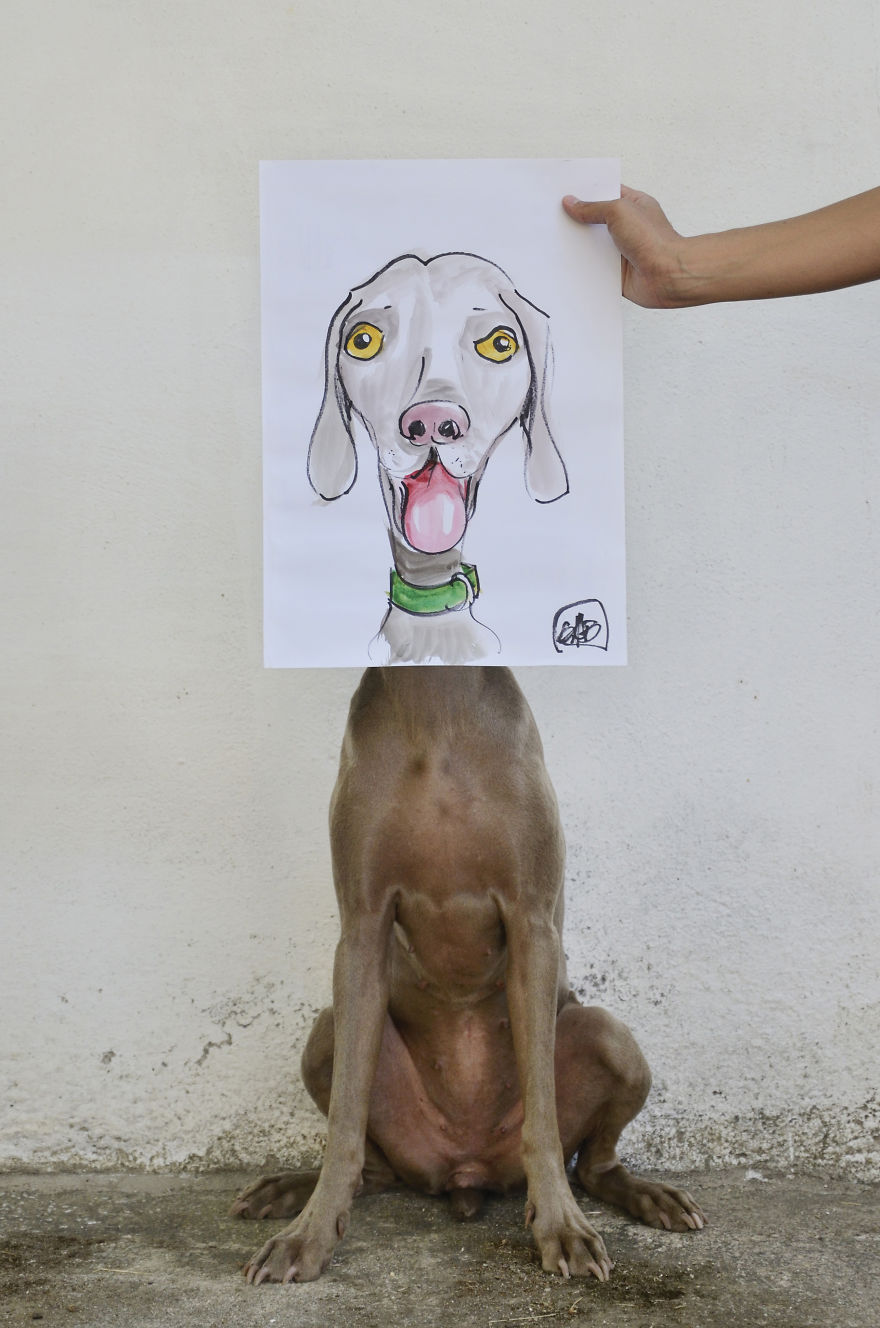 Bruma perro 5