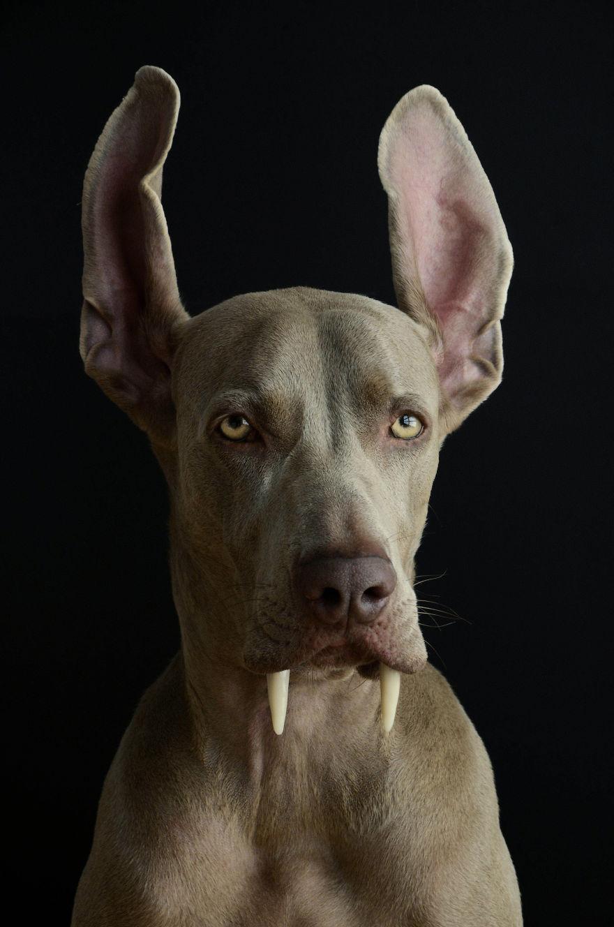Bruma perro 6