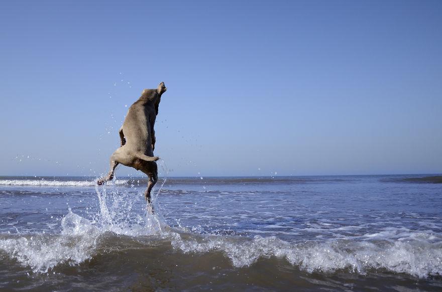 Bruma perro 7