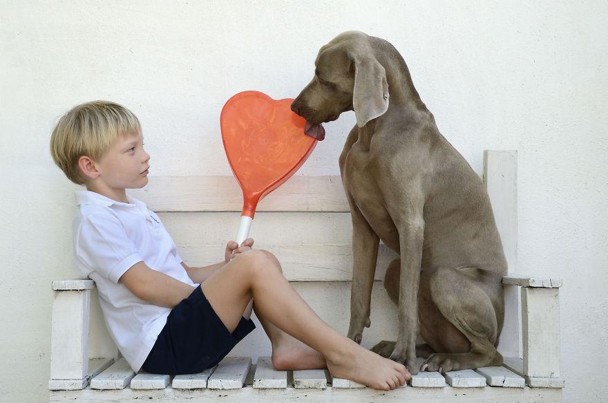 Bruma perro