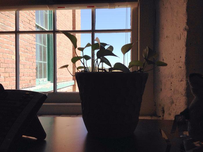 al cuidado de una planta 22