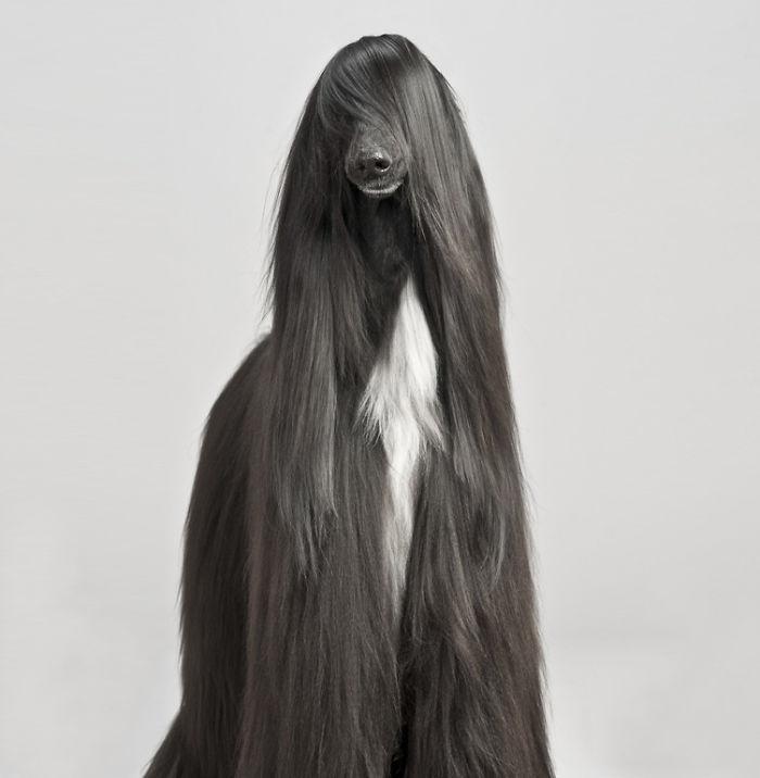 animales con un pelazo 4