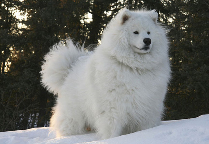animales con un pelazo 9