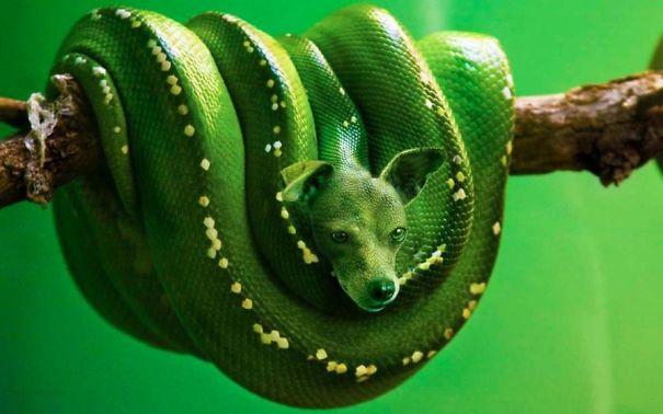 animales hibridos 9