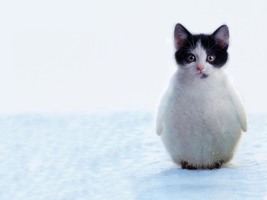 el gato pinguino