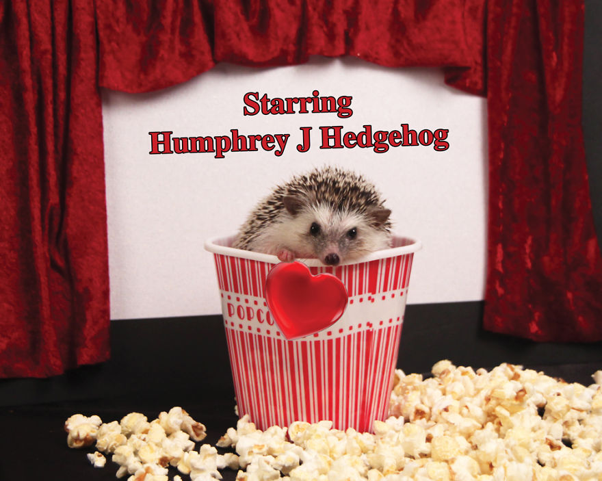erizo Humphrey 4