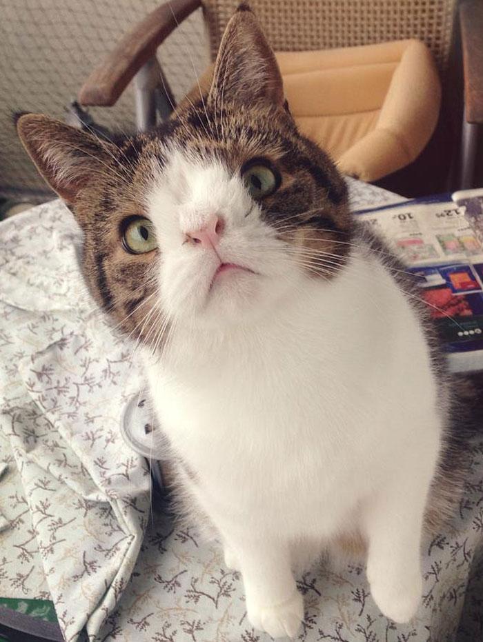 gato cara rara 10