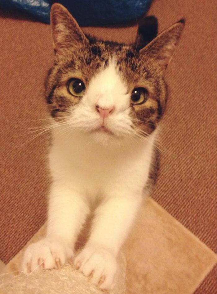 gato cara rara 12
