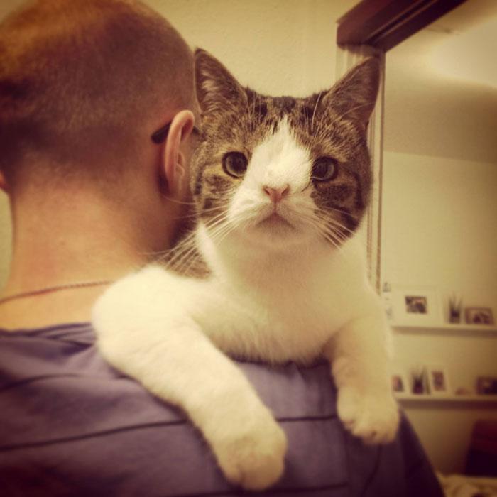 gato cara rara 2