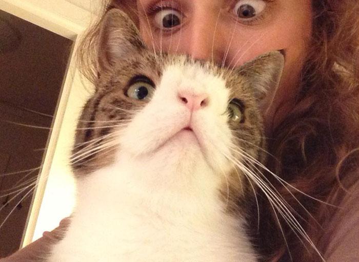 gato cara rara 7