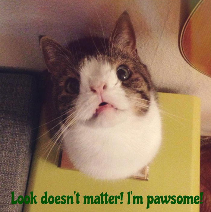 gato cara rara 8