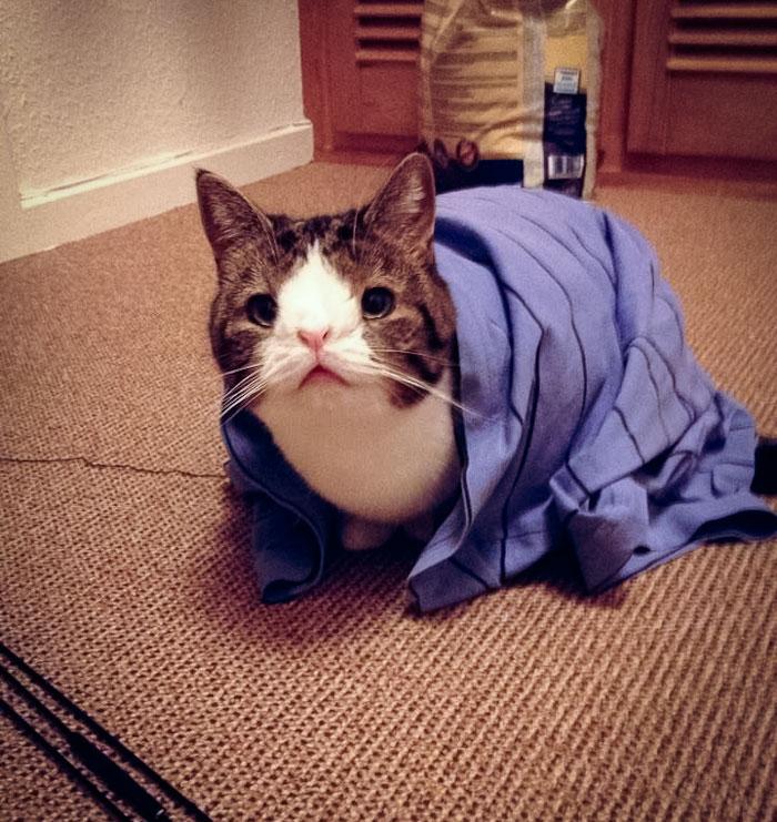 gato cara rara