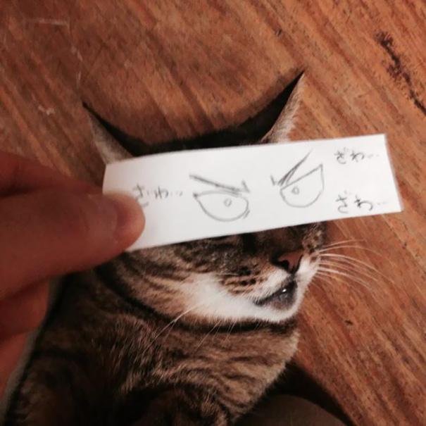 gatos ojos 10