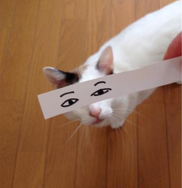 gatos ojos 11