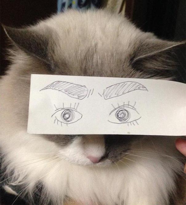 gatos ojos 13