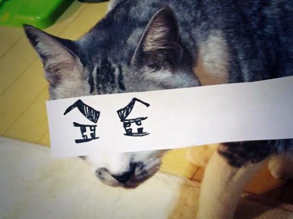 gatos ojos 14