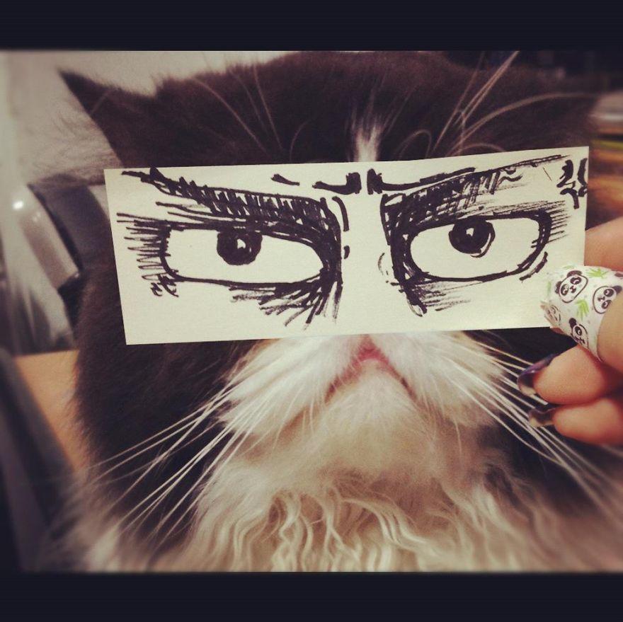 gatos ojos 15