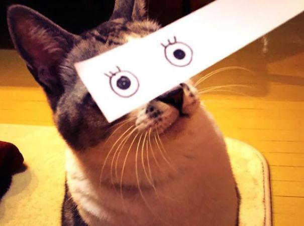 gatos ojos 3