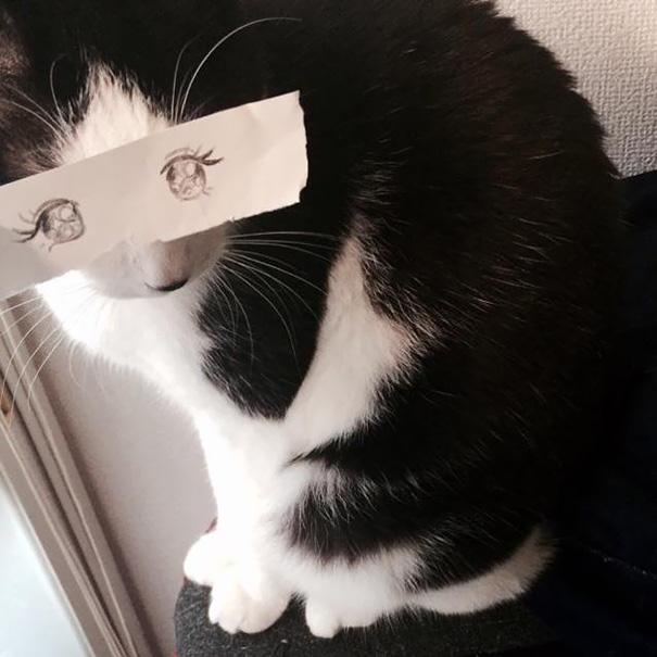 gatos ojos 5
