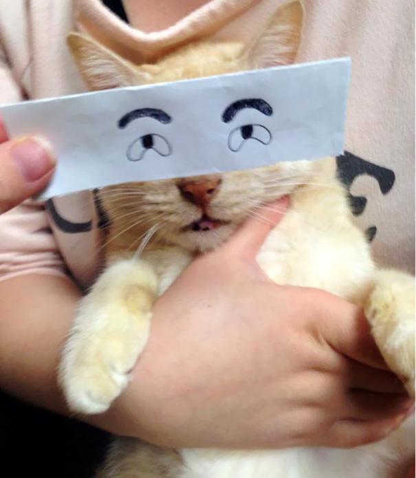 gatos ojos 6