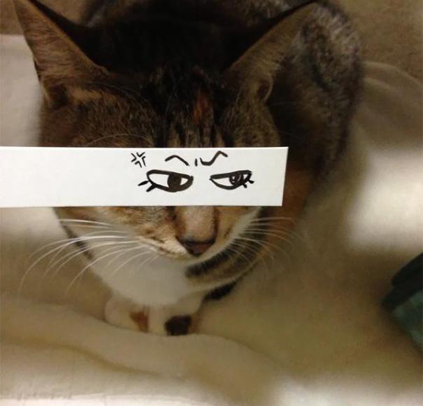 gatos ojos 7