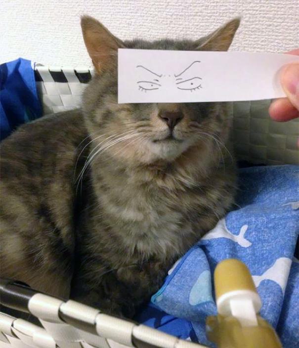 gatos ojos 8