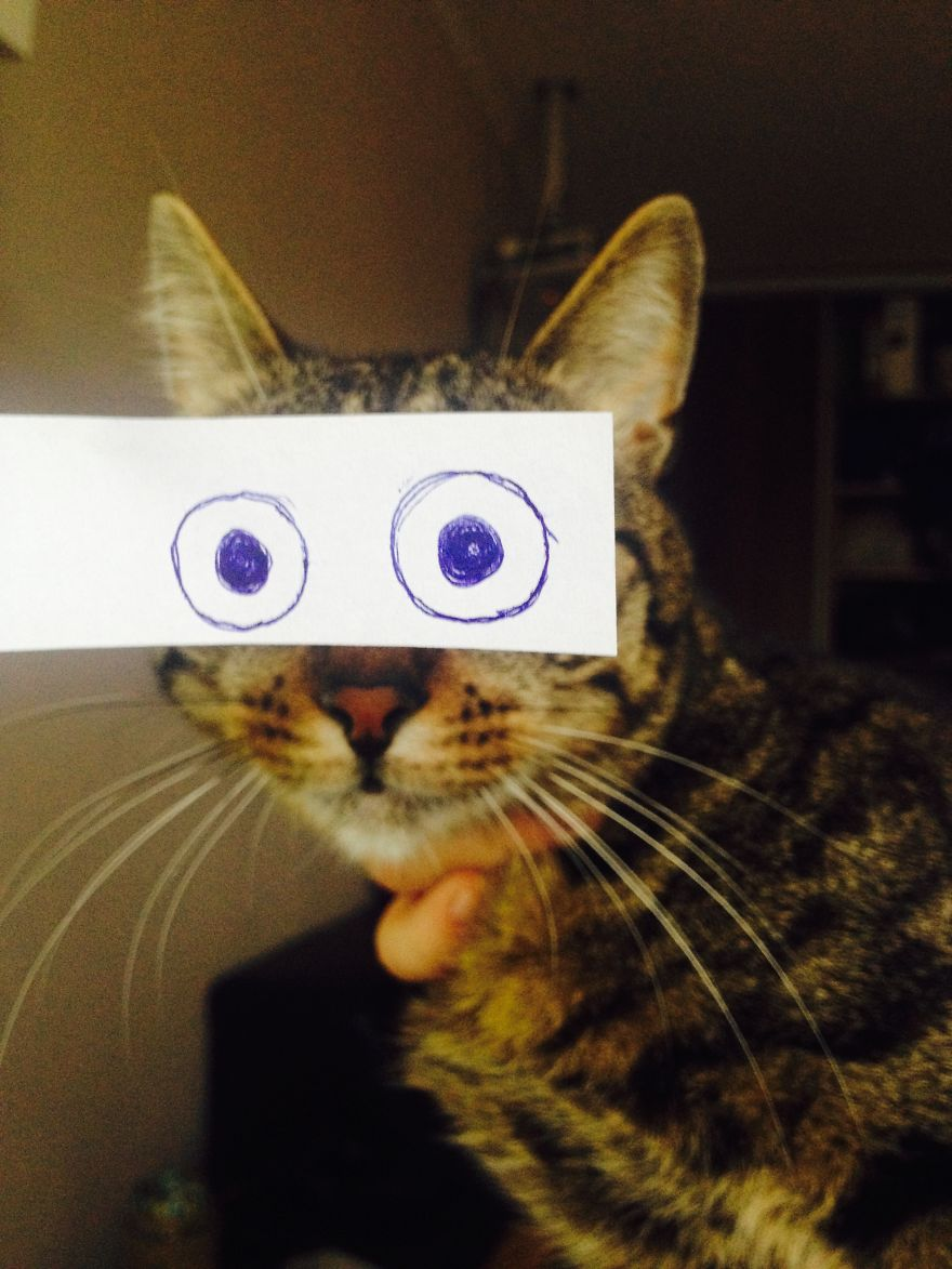 gatos ojos 9