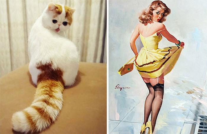 gatos parecidos a 12