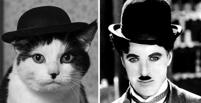 gatos parecidos a 14