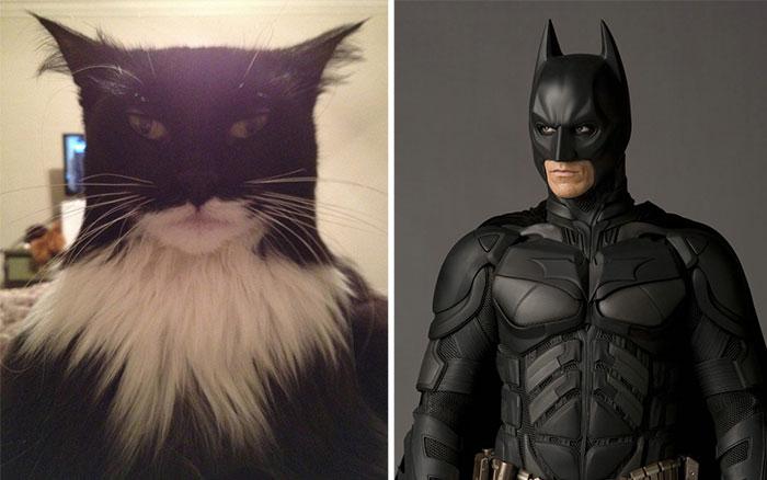 gatos parecidos a 2