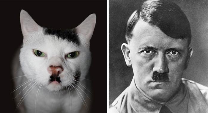 gatos parecidos a 3