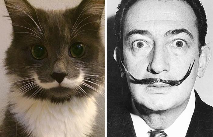 gatos parecidos a 4