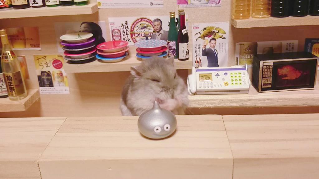 hamsters 11