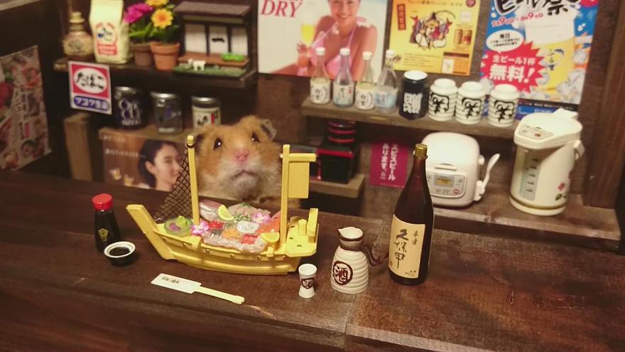 hamsters 12