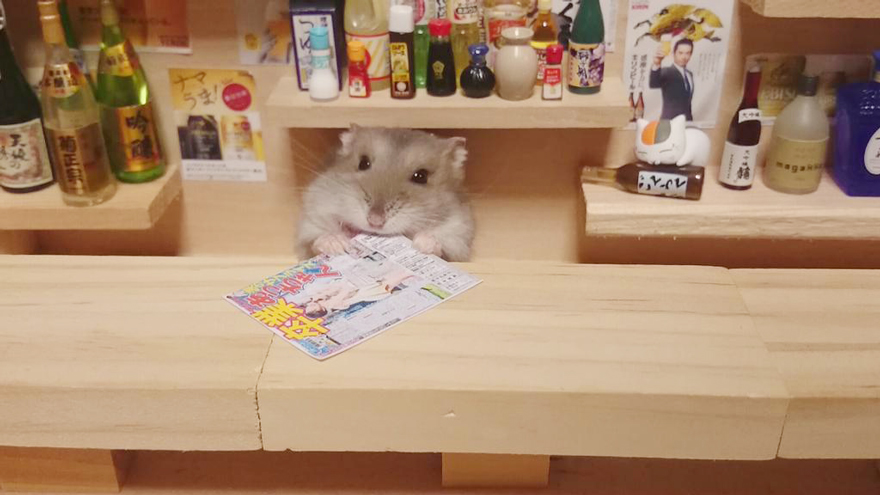 hamsters 13