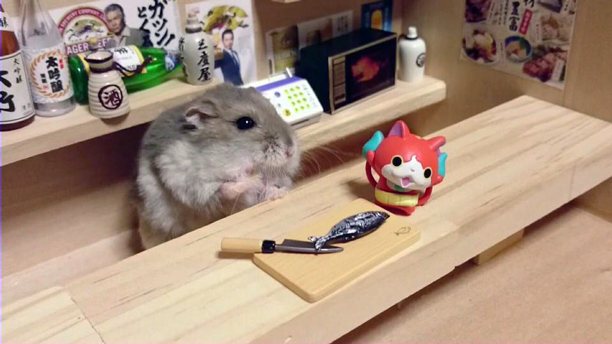 hamsters 16