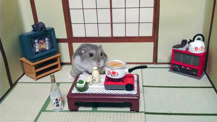 hamsters 17